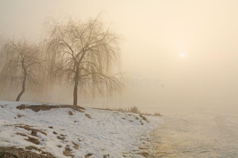 Sneeuwkust van het meer in de mist stock afbeeldingen