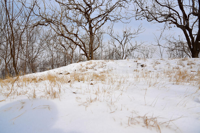 Sneeuwlandschap stock fotografie