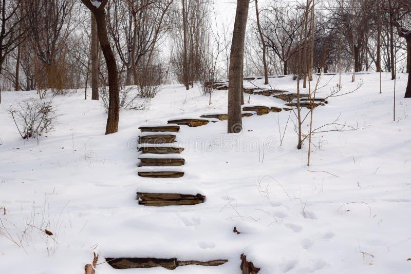 Sneeuwlandschap royalty-vrije stock fotografie
