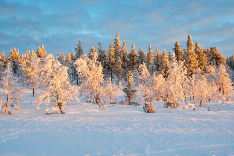 Sneeuwlandschap, bevroren bomen in de winter in Saariselka, Lapland Finland stock fotografie