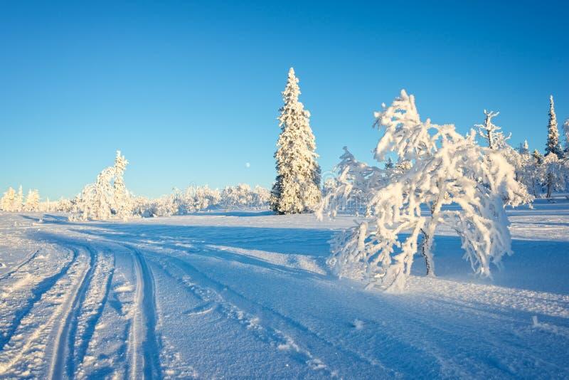 Sneeuwlandschap, bevroren bomen in de winter in Saariselka, Lapland Finland royalty-vrije stock afbeelding