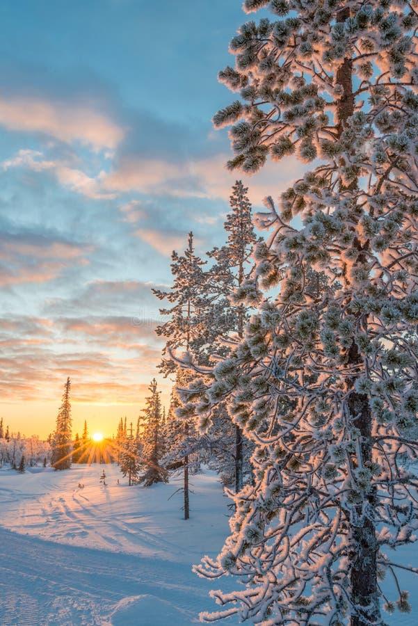Sneeuwlandschap bij zonsondergang, bevroren bomen in de winter in Saariselka, Lapland Finland royalty-vrije stock fotografie