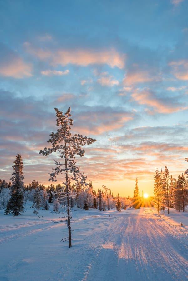 Sneeuwlandschap bij zonsondergang, bevroren bomen in de winter in Saariselka, Lapland Finland stock foto's