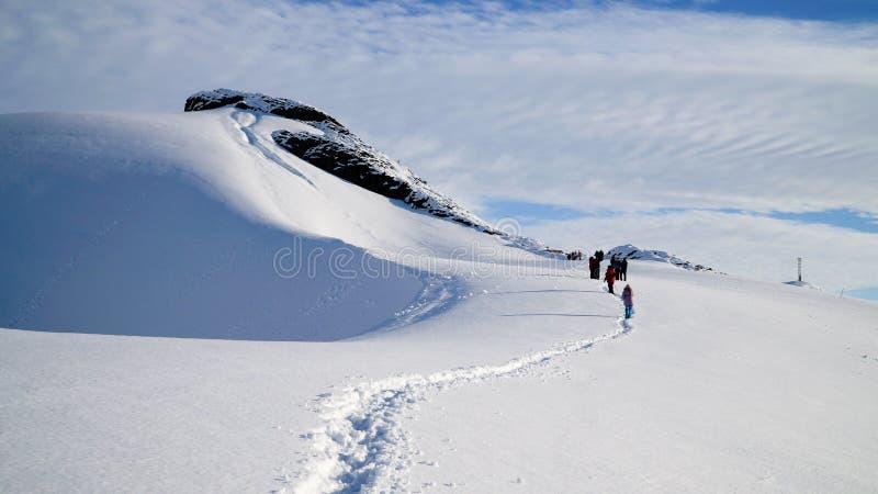 Sneeuwmeningen van de Bruine Post op Paradijshaven/Eiland in Antarctica stock foto's