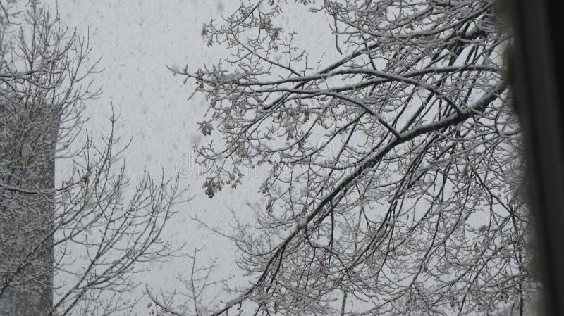 Sneeuwonweer royalty-vrije stock foto
