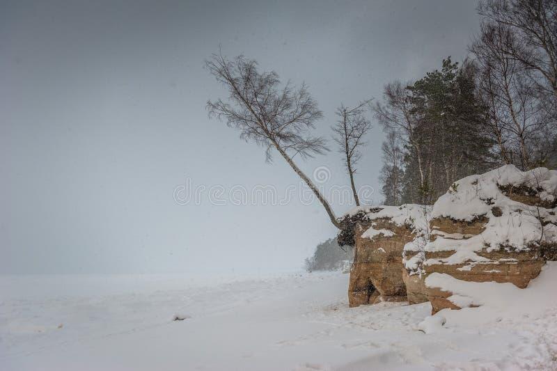 Sneeuwonweer in het bos stock foto