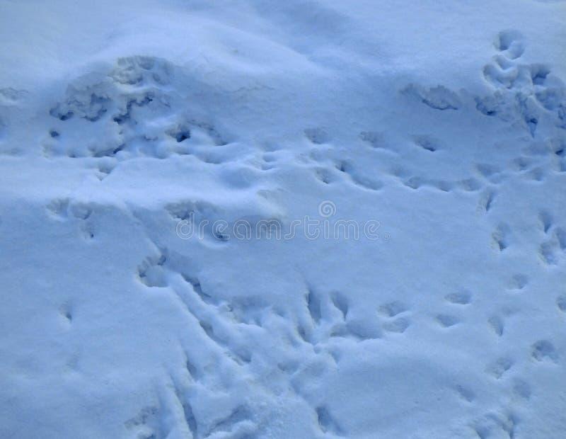 Sneeuwoppervlakte met schaduwen en vogelssporen royalty-vrije stock afbeelding