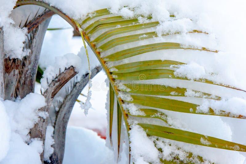 Sneeuwpalmvarenbladen die over neerhangen royalty-vrije stock foto