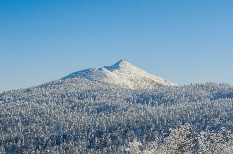 Sneeuwpiek stock foto