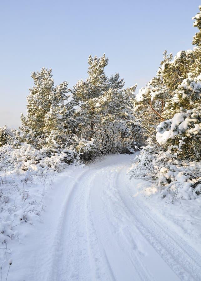 Sneeuwplattelandsweg en bomen royalty-vrije stock fotografie