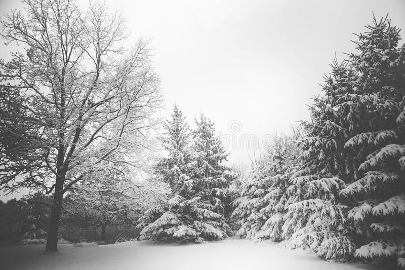 Sneeuwscène stock fotografie