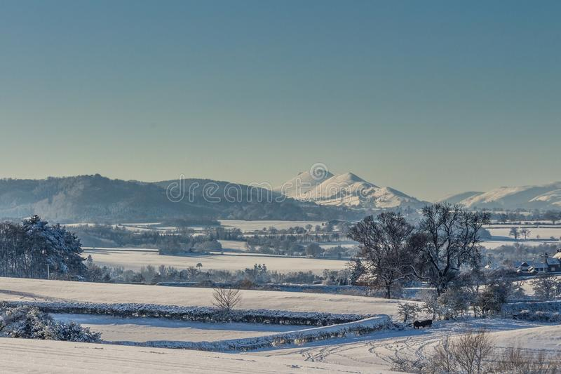 Sneeuwshropshire stock foto