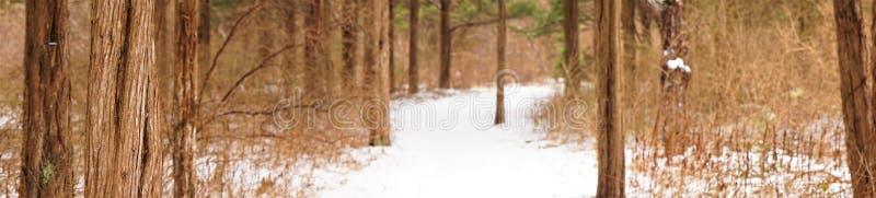 Sneeuwsleep door lange rode ceders stock afbeeldingen