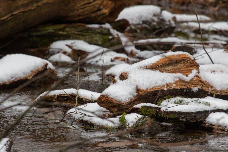 Sneeuwsmelten over houtpuin royalty-vrije stock foto's