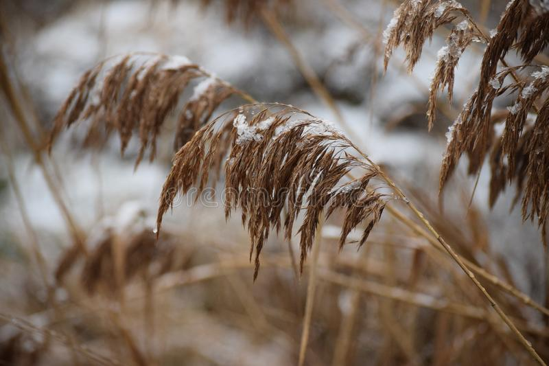 Sneeuwsmeltingen stock fotografie