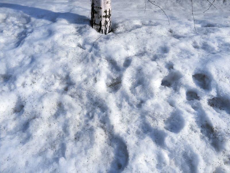 Sneeuwsmeltingen in de zon stock foto's