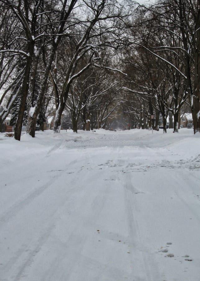 Sneeuwstorm op straat in de voorsteden in de van het Midwesten, noordelijke winter van Illinois royalty-vrije stock foto