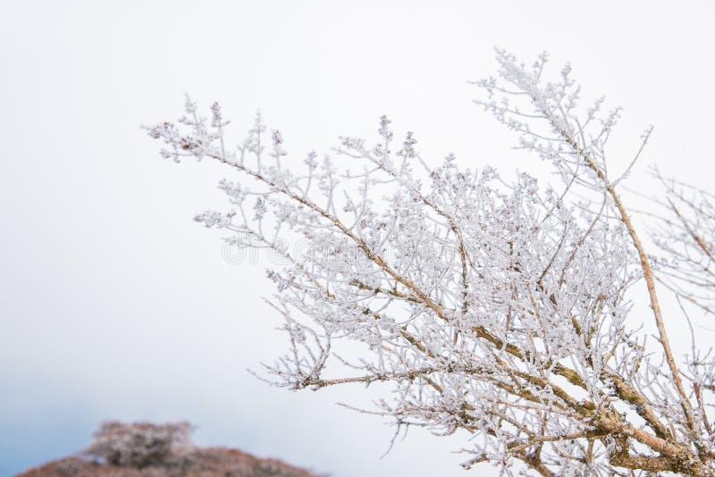 Sneeuwtak stock foto