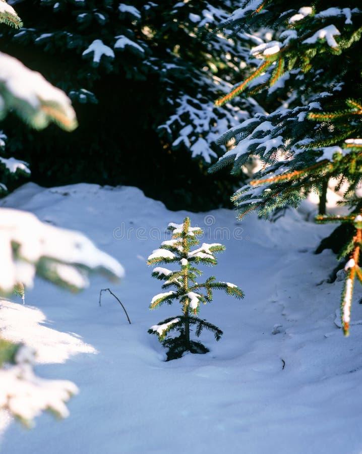 Sneeuwterugtocht royalty-vrije stock afbeelding