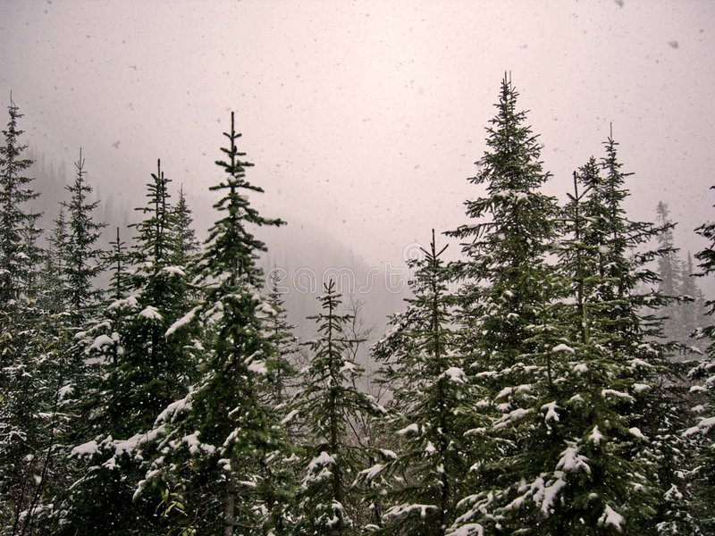 Sneeuwval 1 stock afbeelding