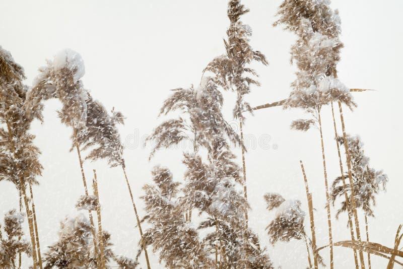 sneeuwval stock fotografie
