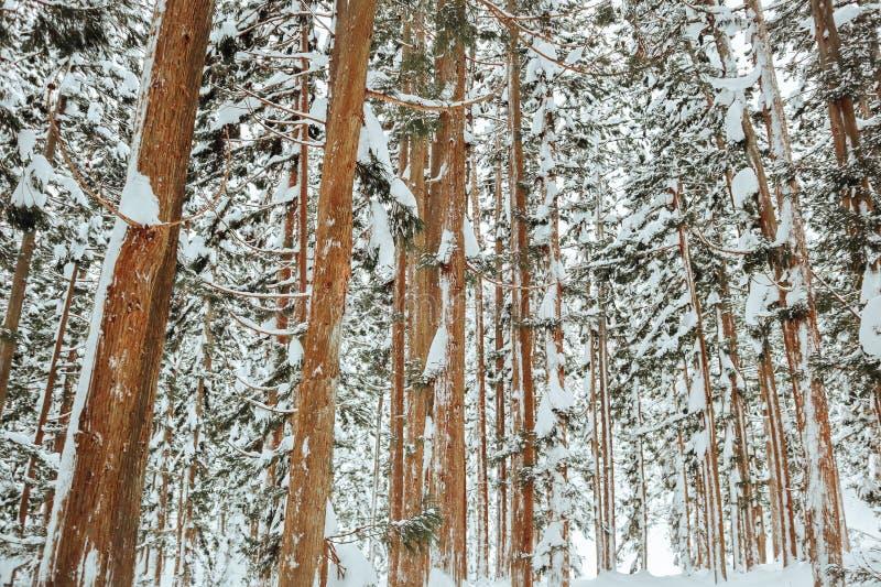 Sneeuwval in Bomen stock foto's