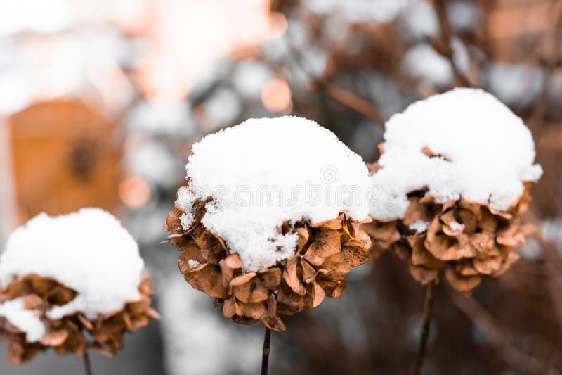Sneeuwval in een tuin stock afbeelding