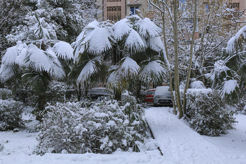 Sneeuwval in het park Palmen onder sneeuw in ongebruikelijk koud weer stock fotografie