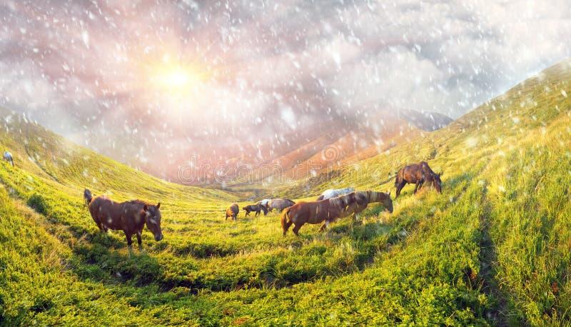 Sneeuwval over de kudde van paarden royalty-vrije stock foto