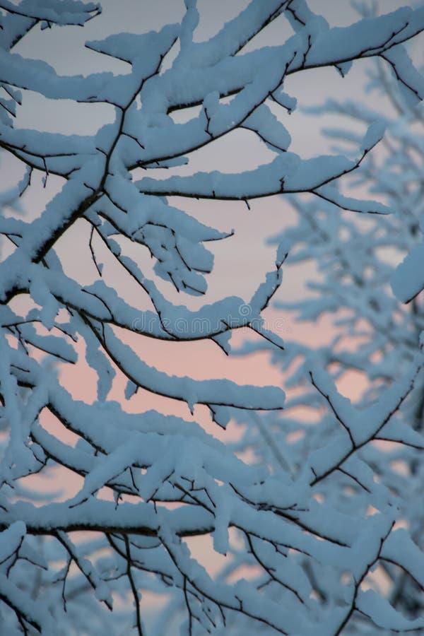 Sneeuwvalsneeuw op boom die tak behandelen royalty-vrije stock afbeeldingen