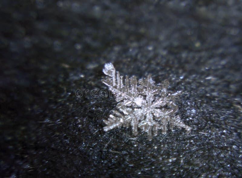 Sneeuwvlok die bij zwart asfalt smelten royalty-vrije stock fotografie