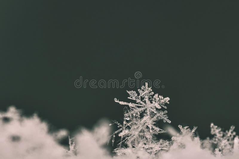 sneeuwvlok Macrofoto van echt sneeuwkristal Mooie de winter seizoengebonden aard als achtergrond en het weer in de winter stock afbeeldingen
