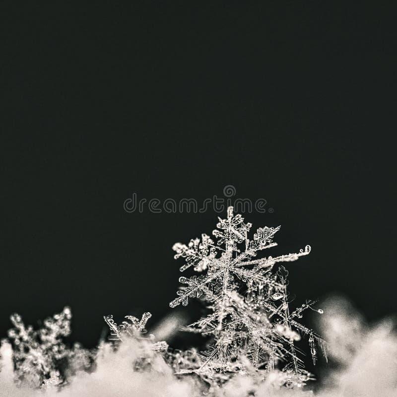 sneeuwvlok Macrofoto van echt sneeuwkristal Mooie de winter seizoengebonden aard als achtergrond en het weer in de winter royalty-vrije stock fotografie