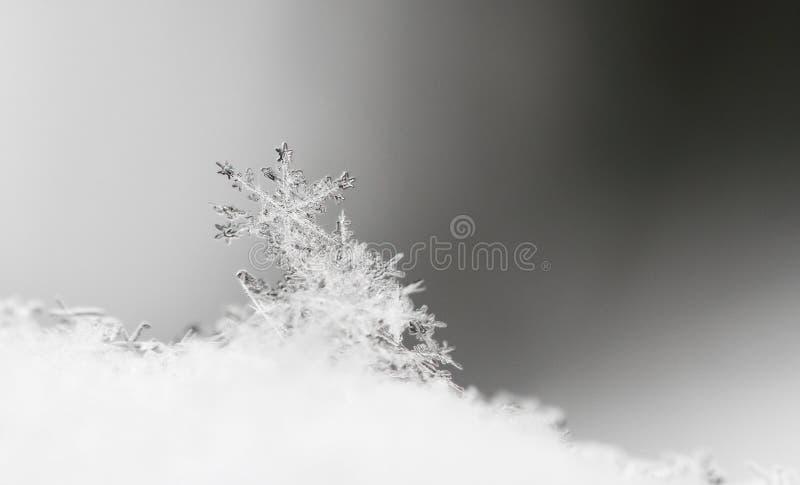 Sneeuwvlok in witte sneeuw royalty-vrije stock afbeeldingen