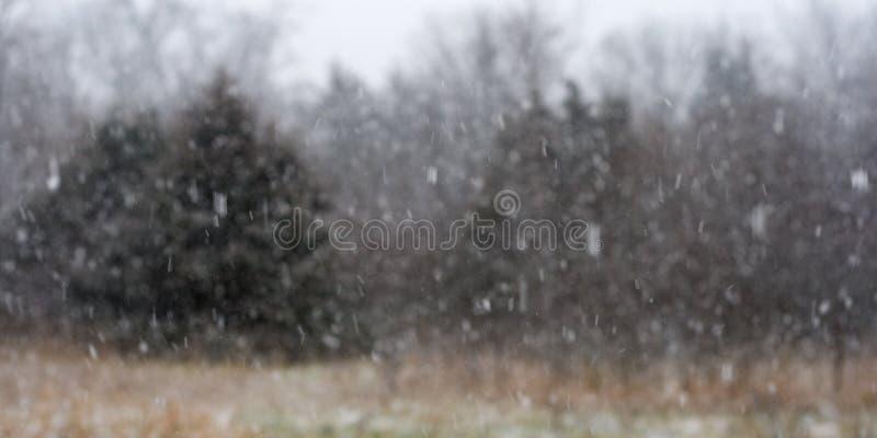 Sneeuwvlokken die in de prairie voor het bos vallen stock afbeelding