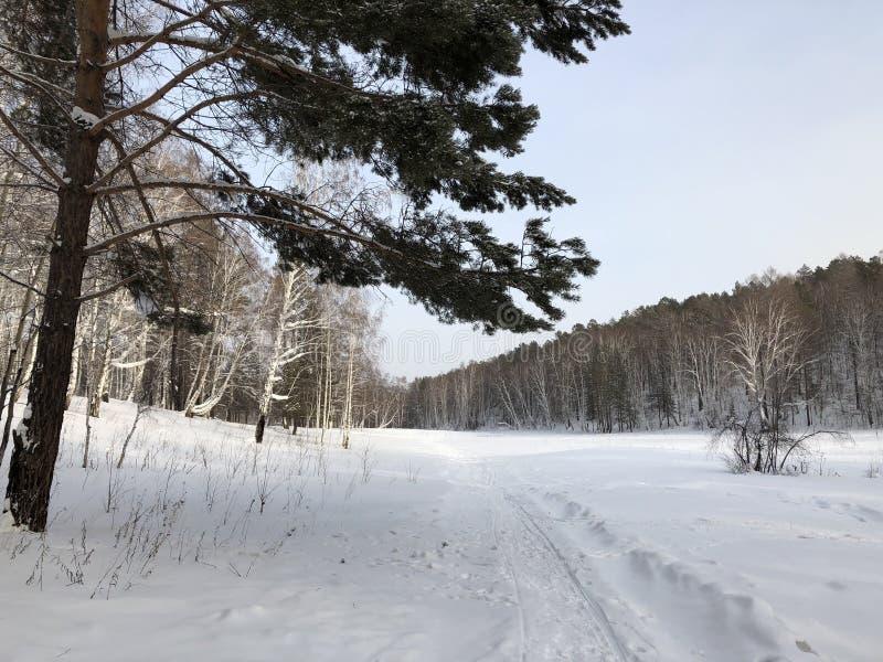 Sneeuwweg stock fotografie