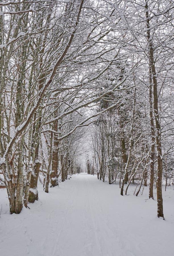 Sneeuwweg door het bos royalty-vrije stock afbeelding