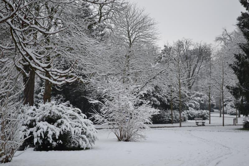 Sneeuwweg in een Park stock foto's