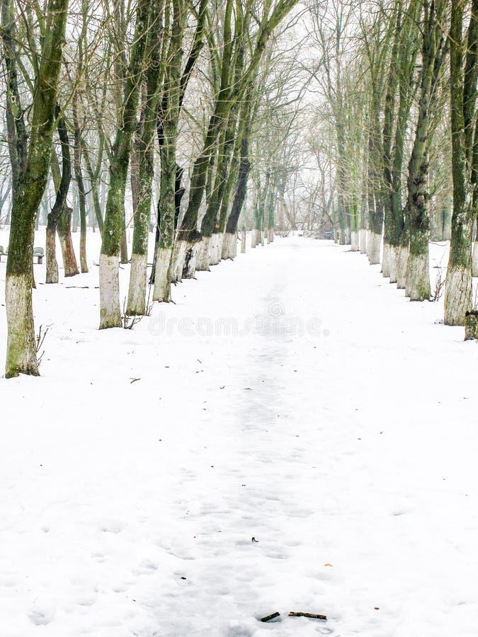 Sneeuwweg in het de winterpark stock foto