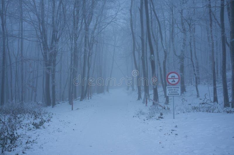 Sneeuwweg in Kleine Karpatische Bergen in Koude de Winterochtend royalty-vrije stock afbeeldingen
