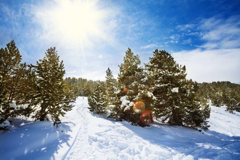 Sneeuwweg in sneeuwbergbos stock afbeelding