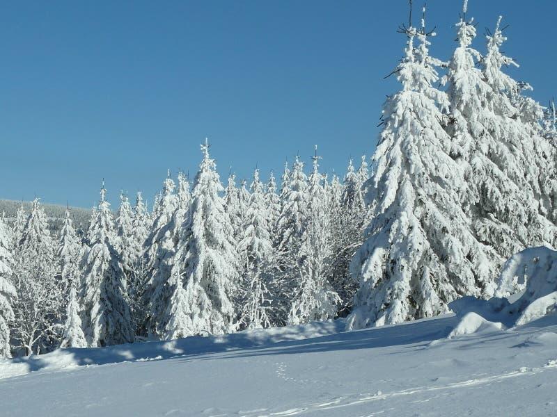Sneeuwwitte bomen in de winterlandschap royalty-vrije stock fotografie