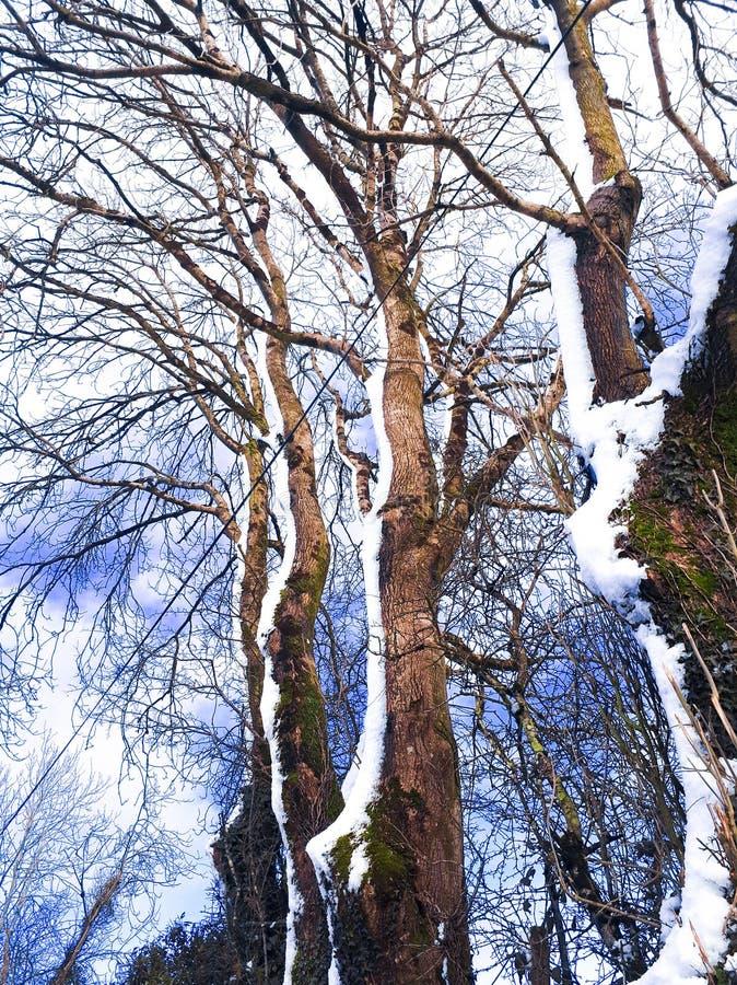 sneeuwzijde van het land royalty-vrije stock foto