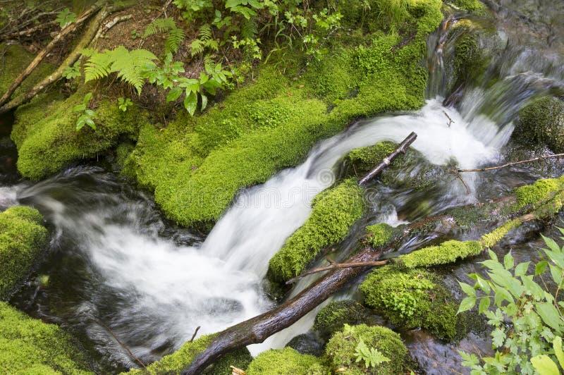 Snelle beek die in de sleep van het Onderstel Carleton lopen, waar de grond door mos en gras wordt behandeld royalty-vrije stock foto's