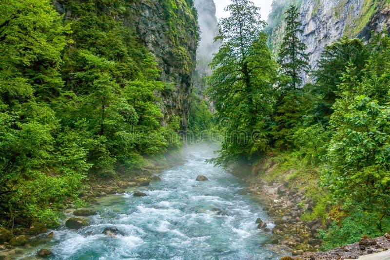 Snelle bergrivier die in het bos stromen stock afbeelding