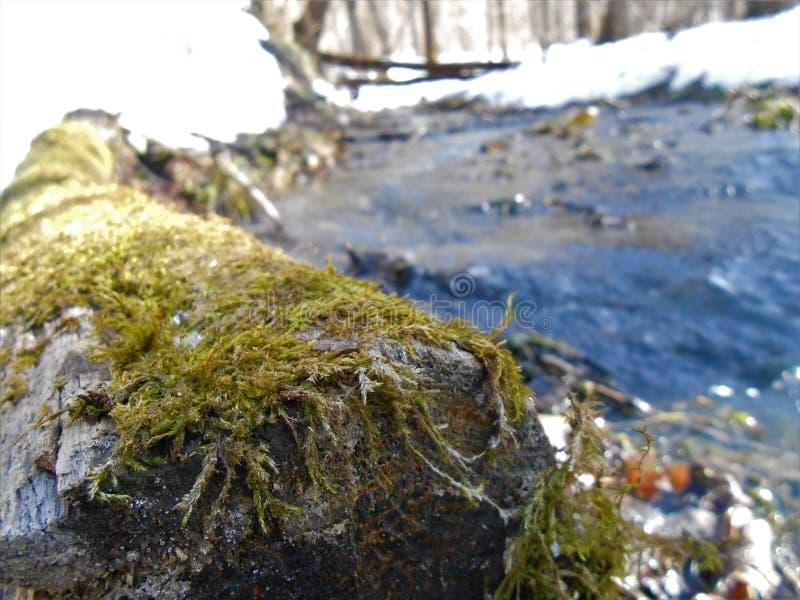 Snelle de lentekreek in het bos met zonbliksem royalty-vrije stock fotografie