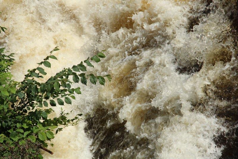 Snelle rivier en een struik royalty-vrije stock fotografie