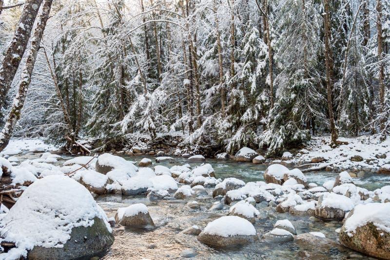 Snelle stroom in het de winter sneeuwbos royalty-vrije stock afbeeldingen