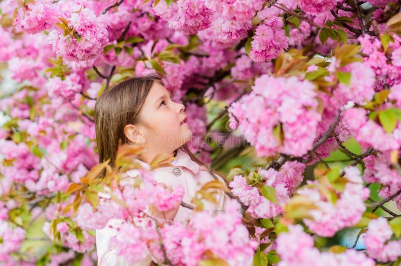 Sniffa blommor Bli av med den s?songsbetonade allergin Flicka som tycker om blom- arom Pollenallergibegrepp Unge p? rosa blommor royaltyfri bild