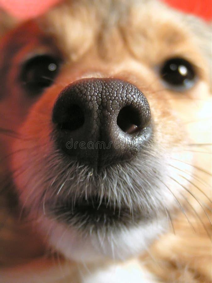 Sniffing a câmera foto de stock royalty free